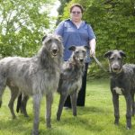 Scottish Deerhounds Photos