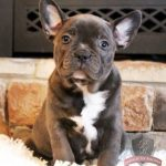 Frenchton Pictures
