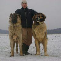 Caucasian Mountain Shepherd