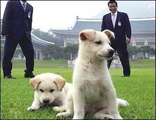 Pungsan Puppies