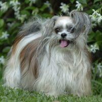 Miki Dog Photos