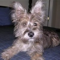 Fourche Terrier Images