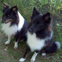 Poshie Dogs